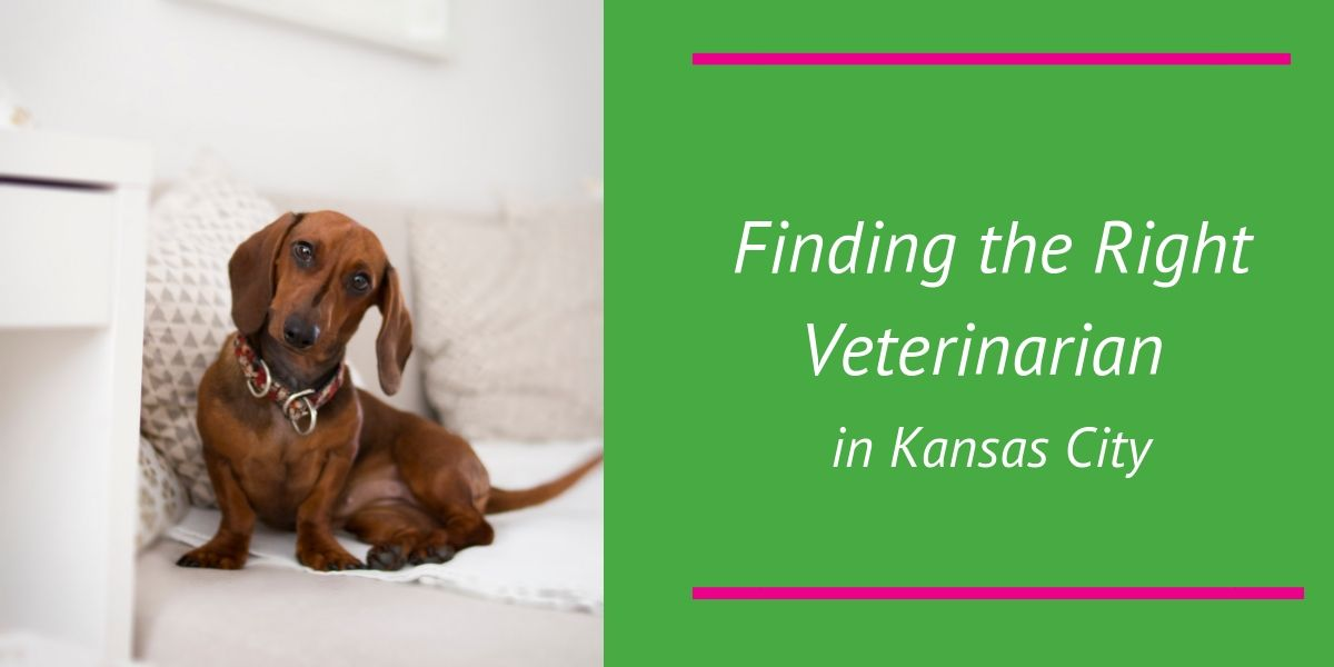 Finding the Right Veterinarian in Kansas City