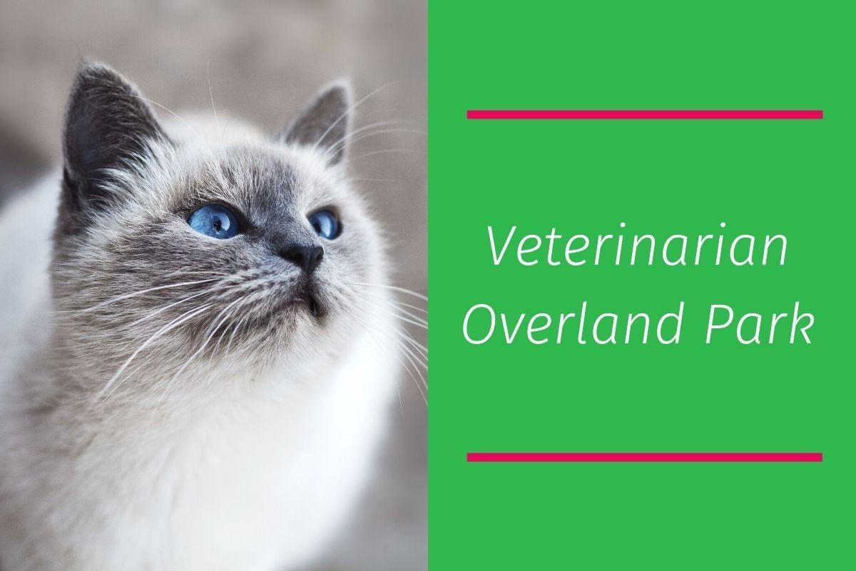 Veterinarian-Overland-Park-1